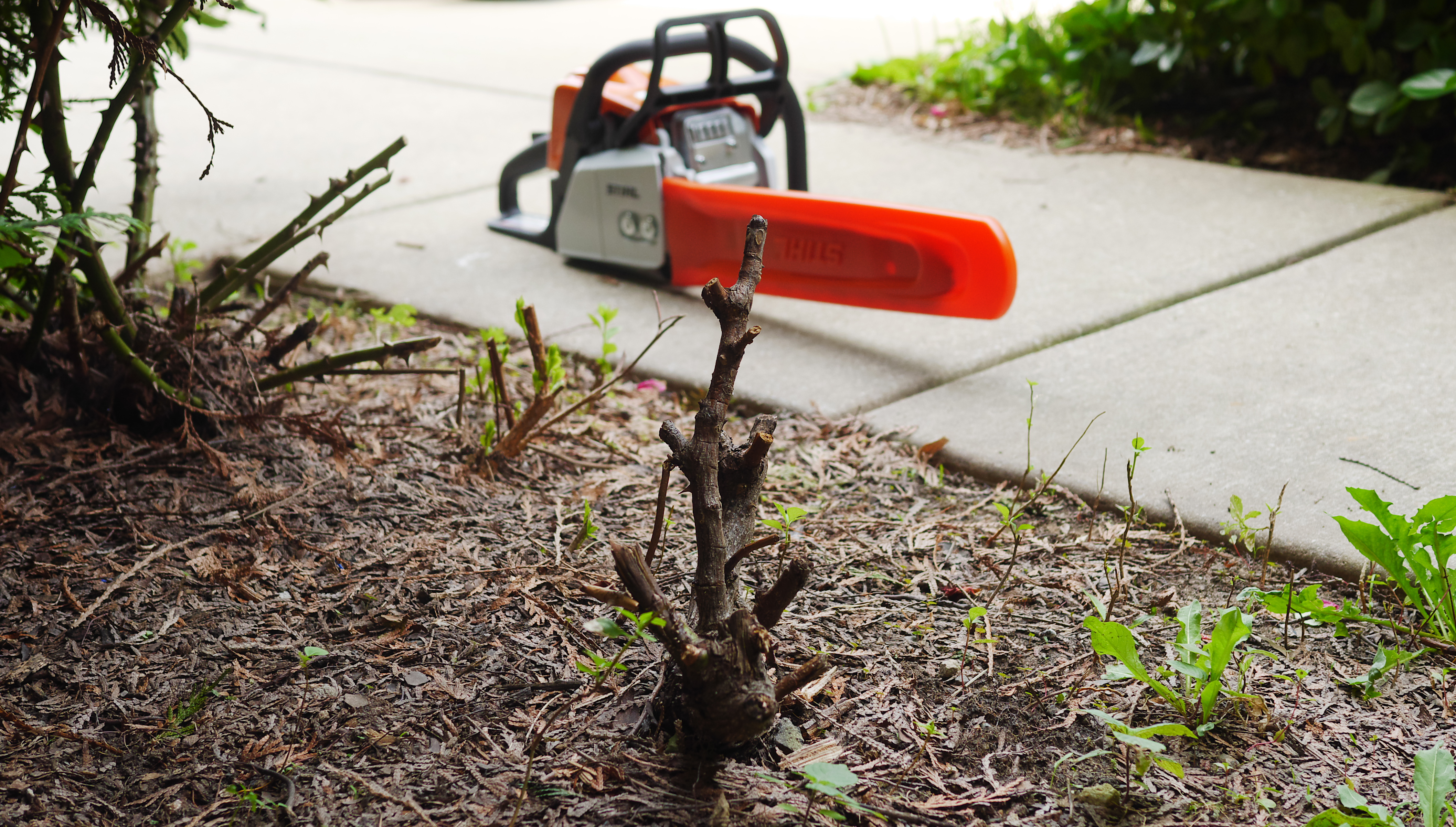 Summer Landscaping summer landscaping with the stihl ms 170 chainsaw - theresa's reviews