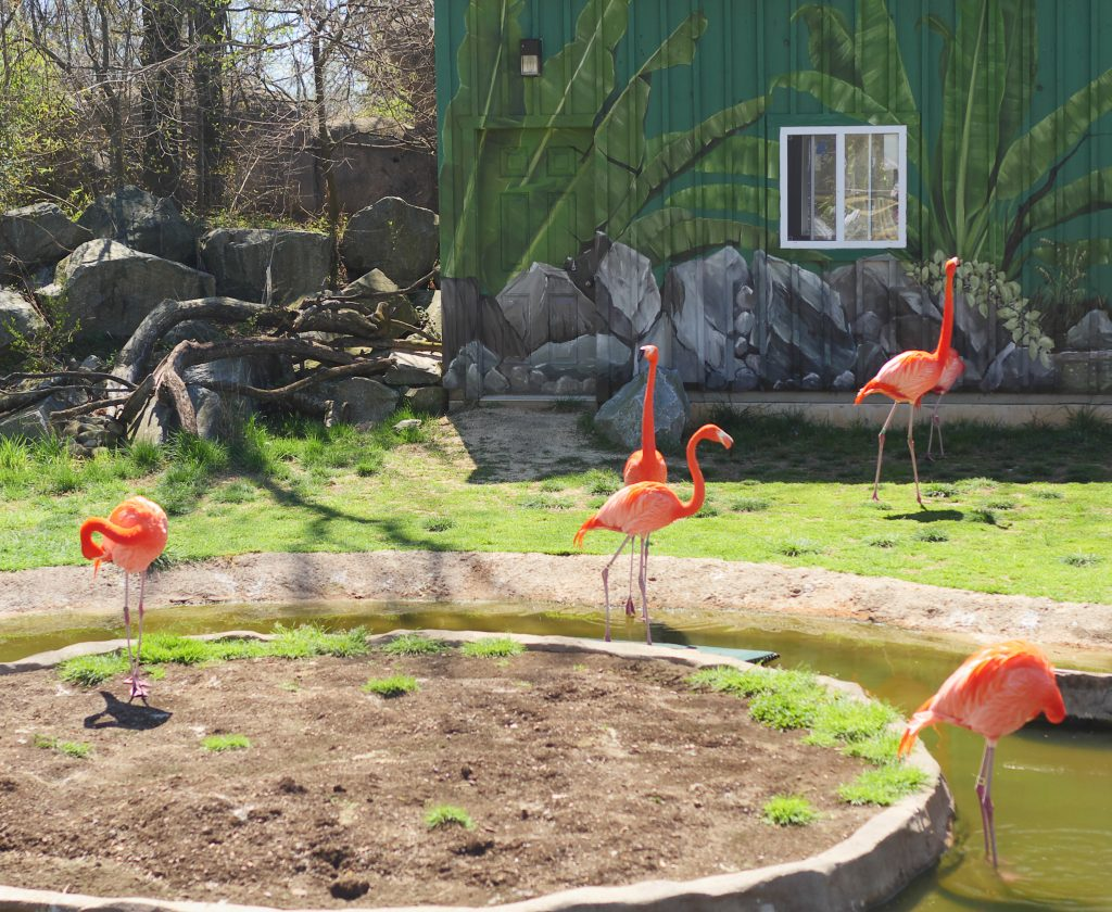 Incredible Animal Encounters At The Maryland Zoo In Baltimore - Theresa's Reviews