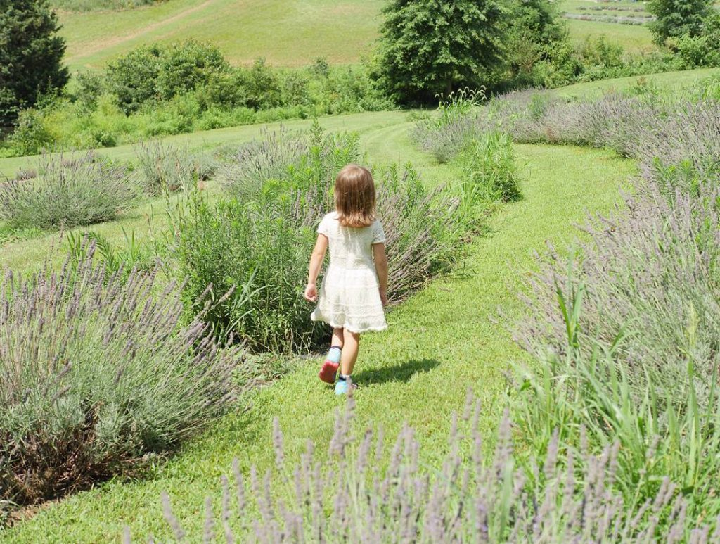 Wide open fields of lavender are perfect for exploring! hellip