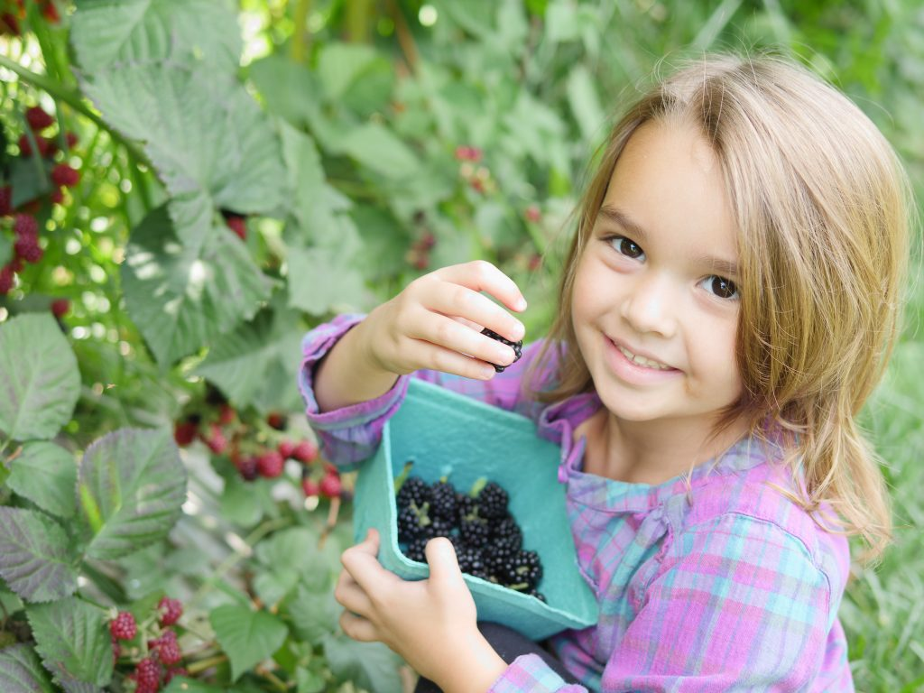 You can also find blackberries at Larriland Farm in Maryland in the fall.