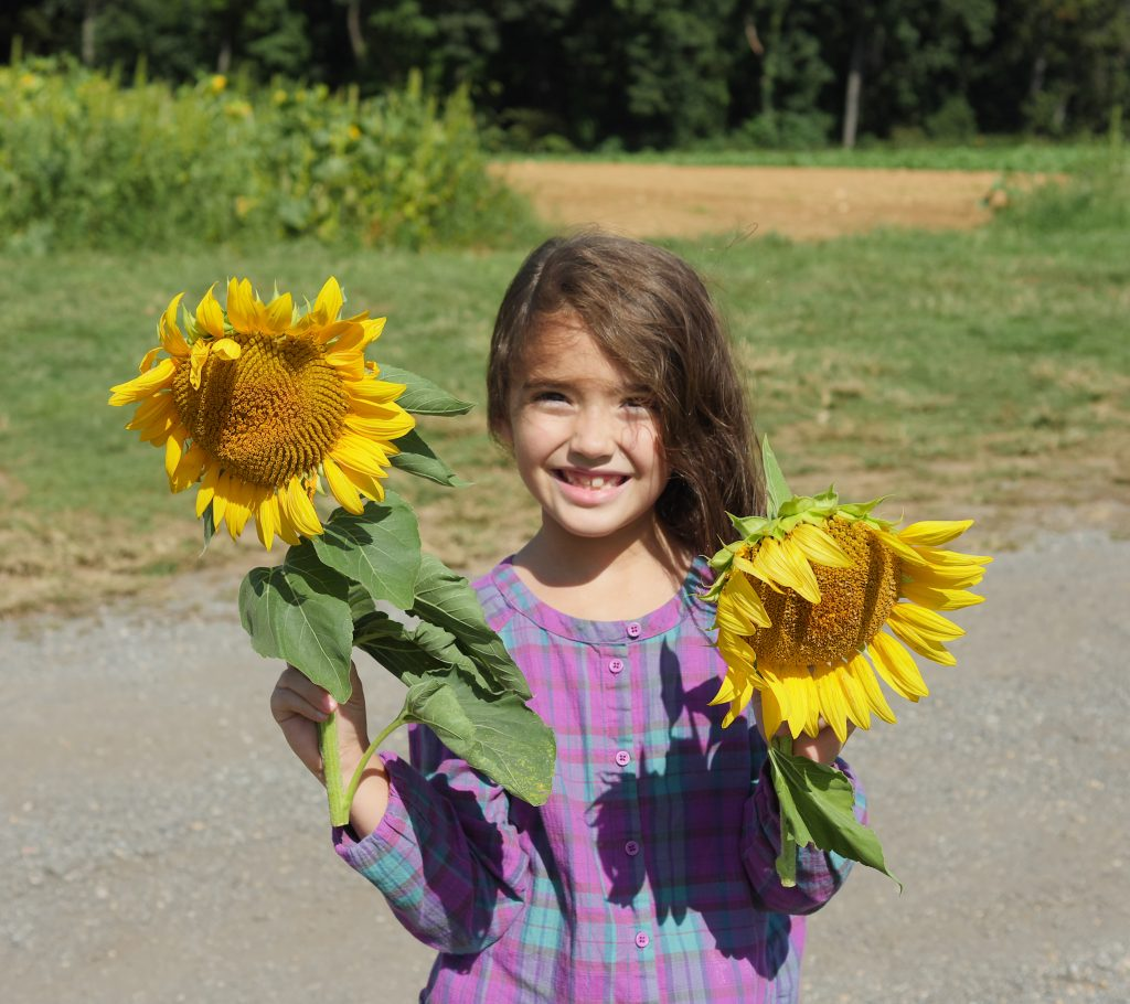 Larriland Farm also has a sunflower field in the fall.