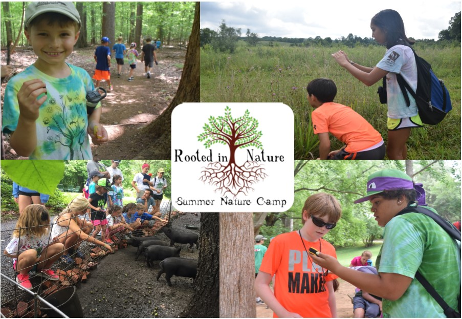Theresa's Reviews 2018 Maryland Area Camp Guide - Howard County Conservancy's Nature Day Camp