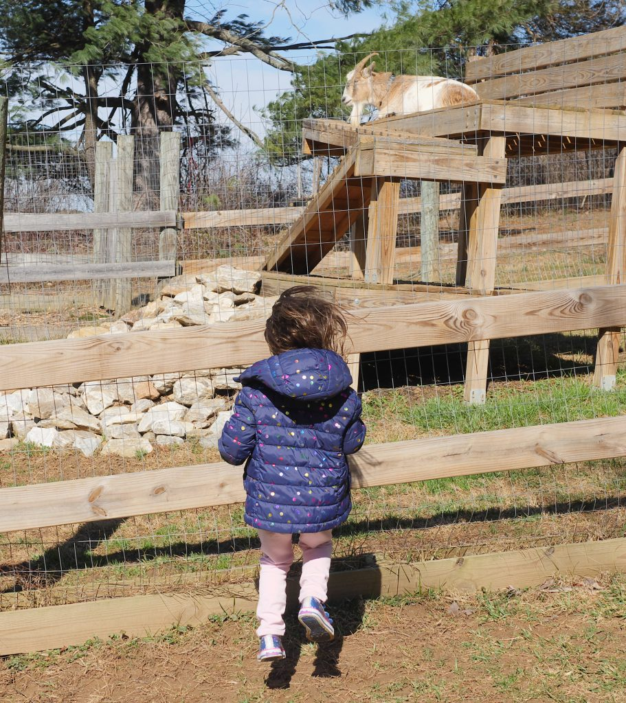 Favorite Springtime Things To Do - Visiting Farm Animals