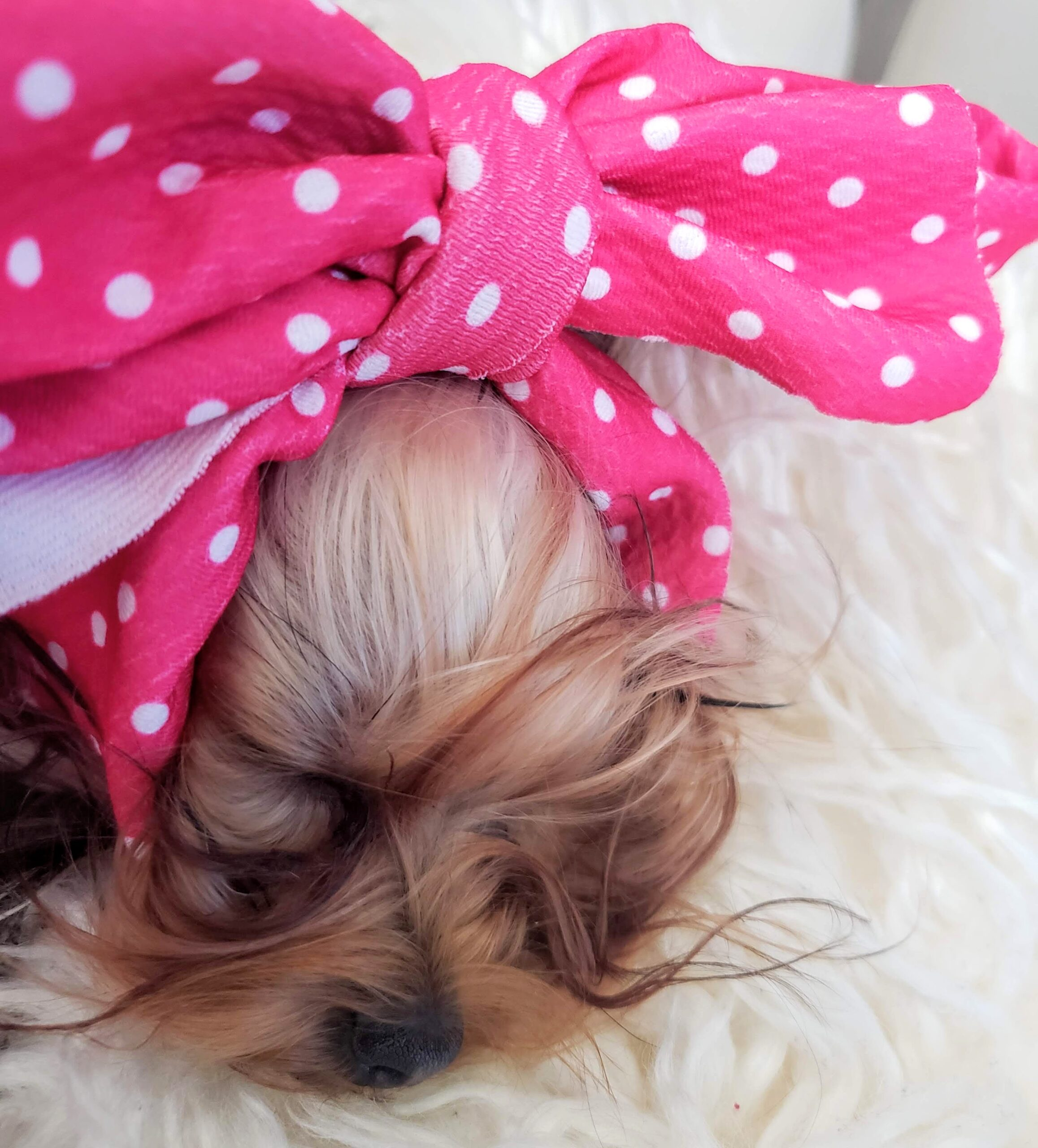 Frenchie Store pink and white pet head bow